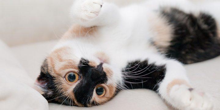 寵物美容師是一個有前途的職業嗎?